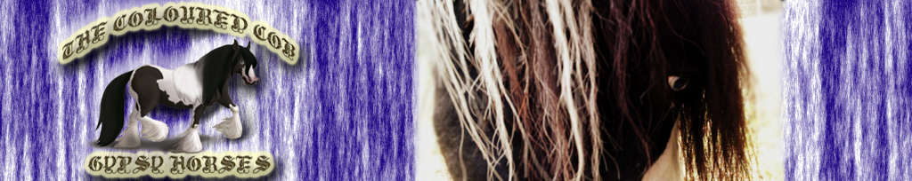 The Coloured Cob Gypsy Horses